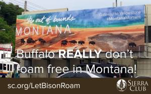 Let Bison Roam